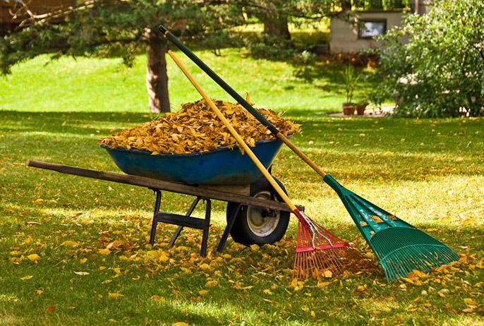 Landscape Clean Up Services
